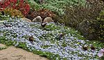 Garden colours IMG 0230 (14256641960).jpg