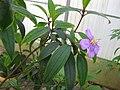 Gardenology.org-IMG 7807 qsbg11mar.jpg