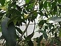Gardenology.org-IMG 8175 qsbg11mar.jpg