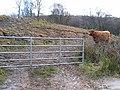 Gate entrance to farm livestock. - geograph.org.uk - 120848.jpg