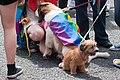 Gay Pride Parade 2010 - Dublin (4736449025).jpg