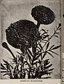 Germain - (catalog) (1922) (14760241901).jpg