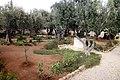 Gethsesmane in East Jerusalem.jpg