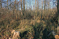 Gfp-wisconsin-pike-lake-state-park-inter-forest.jpg