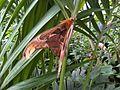 Giant moth 8.jpg