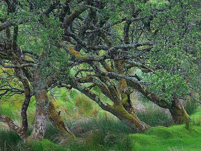 File:Glengesh pass in Ireland old tree.jpg