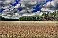 Gmina Narew, Poland - panoramio (42).jpg