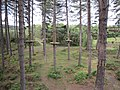 Go Ape Cannock Chase - Site 4 - panoramio.jpg