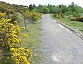 Gorse bushes and path - geograph.org.uk - 818353.jpg