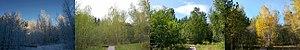 Lake Forest Park, Washington - Grace Cole Nature Park through the seasons, 2006-2008