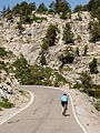 Granite and Pine - Ebbetts Pass.jpg