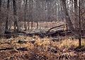 Great Swamp National Wildlife Refuge.jpg