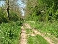 Green Lane Towards Nafferton - geograph.org.uk - 1302281.jpg
