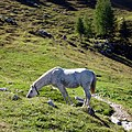 Grigna, Esino Lario, Lecco, Italy - panoramio (7).jpg