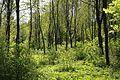 Gruenwalder Forst bei Laufzorn Oberhaching-4.jpg