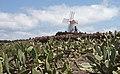 Guatiza - Jardín de Cactus - Lanzarote - J46.jpg