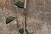 Gynacantha-Kadavoor-2016-03-30-002.jpg