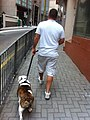 HK Mid-levels 羅便臣道 Robinson Road Dog master walking Dec-2010.jpg