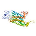 HTR2A Human 5-hydroxytryptamine receptor 2A.png