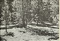 Habitat characteristics of the Silver Lake Mule Deer Range (1971) (20580364821).jpg