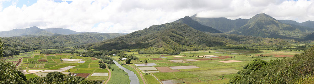 A view of the Hanalei Valley in Northern Kauaʻi. The Hanalei River runs through the valley and 60% of Hawaii's taro is grown in its fields.