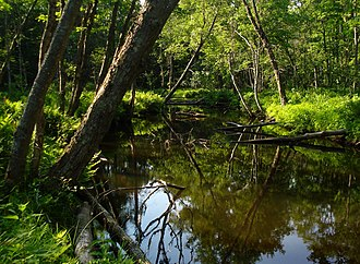 New York State Wildlife Management Areas - Stream and forest at Happy Valley Wildlife Management Area in Oswego County, New York.