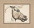 Head of a Horse, after the Parthenon MET DP805841.jpg