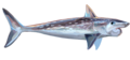 Helicoprion reccon.png