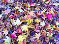 Herbstlaub 01.jpg