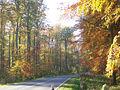 Herbstlicher Buchenwald.JPG