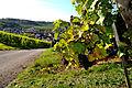 Herbstlicher Spaziergang durch die Becksteiner Weingärten. 10.jpg