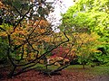 Hiding Amongst the Acers at Westonbirt - geograph.org.uk - 69676.jpg