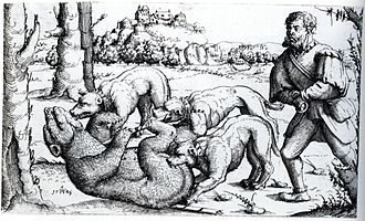Bear hunting - A medieval bear hunt with dogs