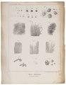 Homo sapiens - anatomie - 1700-1880 - Print - Iconographia Zoologica - Special Collections University of Amsterdam - UBA01 IZ19600067.tif