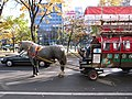 Horse-drawn bus in Sapporo, Hokkaido.jpg