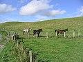 Horse field - geograph.org.uk - 251590.jpg