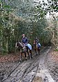 Horses and riders on the Sussex Border Path-Serpent Trail - geograph.org.uk - 1153654.jpg