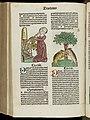 Hortus sanitatis Wellcome L0048100.jpg