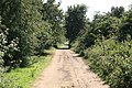 Hot afternoon down the lane - geograph.org.uk - 1451318.jpg