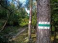 Huciska Puszcza Zielonka (3).jpg