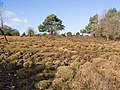 Hummock-scape between Ocknell Inclosure and Winding Stonard, New Forest - geograph.org.uk - 711272.jpg