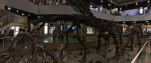 Paleozoological Museum of China - Image: IVPP first floor panorama