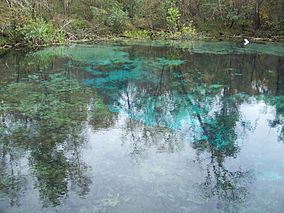 Ichetucknee Springs SP north springs02.jpg