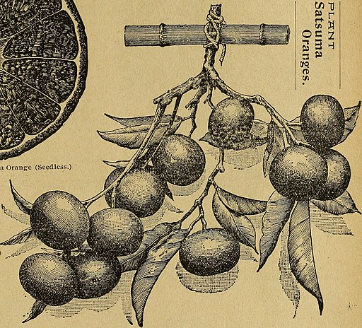 Illustrated seed and floral catalogue - 1900 (1900) (20370905639)