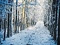 Im Winter Wald , 18. Januar 2019 , Schleswig-Holstein - Deutschland - Flickr - torstenbehrens.jpg