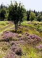 In Mindork Forest - geograph.org.uk - 521591.jpg