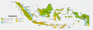 The Distribution of Indonesian vegetation