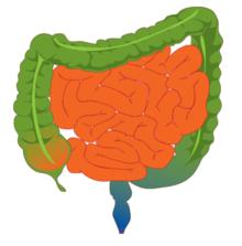agravarea vederii din intestine