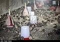 Iran 1395 Coturnix 3.jpg