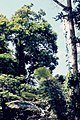 Isla Yanamono 1980 30.jpg